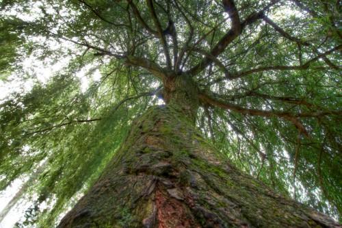 4-6-11-oxford-tree
